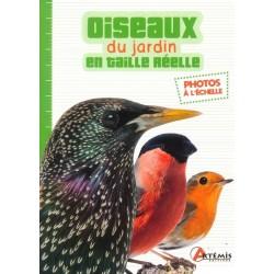 Oiseaux du jardin en taille...