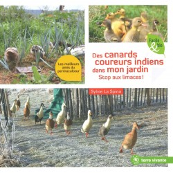 Canards coureurs indiens...