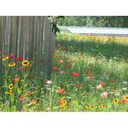 Mélange Prairie Fleurie