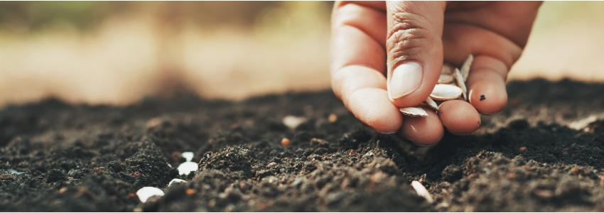 Semences pour vos semis